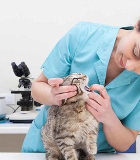 Tierarzt/-ärztin